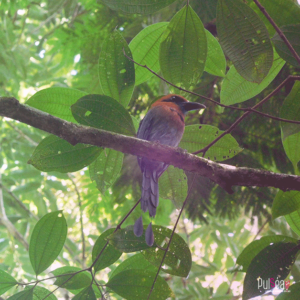 COSTA_RICA7