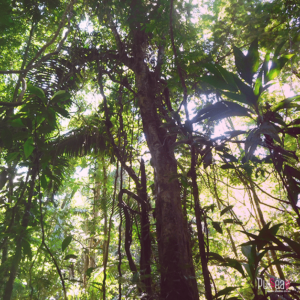 COSTA_RICA8